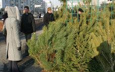 Ёлочные базары в Москве откроются 20 декабря