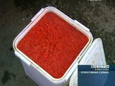 В Мытищах милиционеры обнаружили 9,5 тонн контрафактной икры