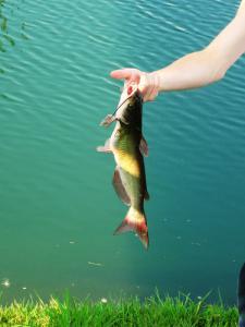 рыбалка на реке Москве